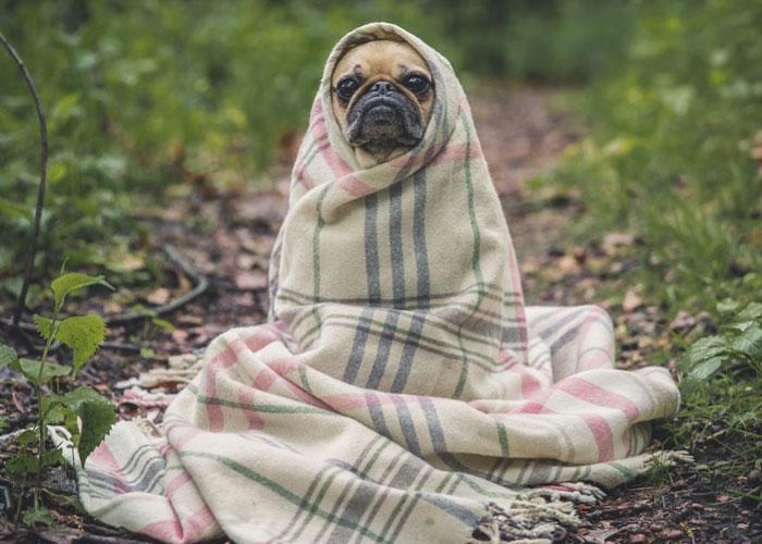Dog Funny Image