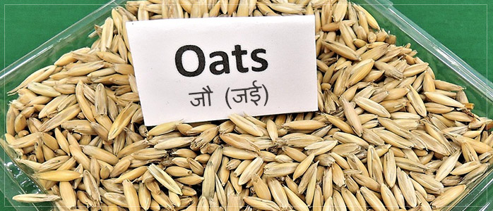 Oats Healthy Diet to Prevent Hair Fall