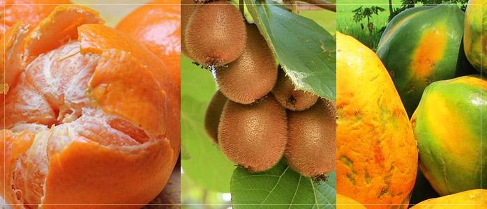 Vitamin-C Rich Healthy Diet to Prevent Hair Fall