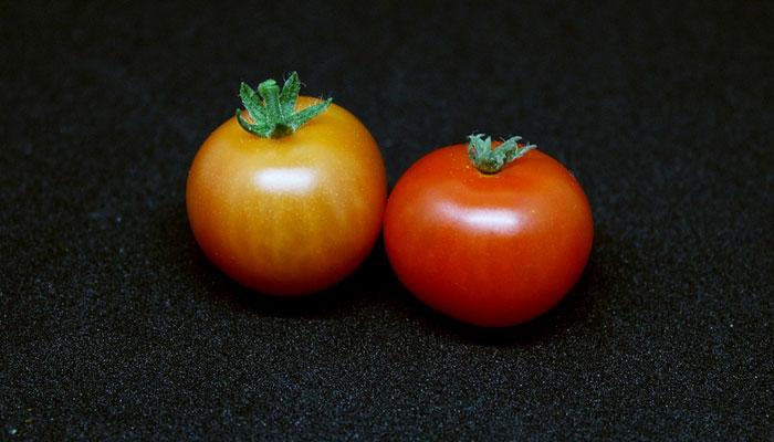 Foods to Improve Memory Power Tomato