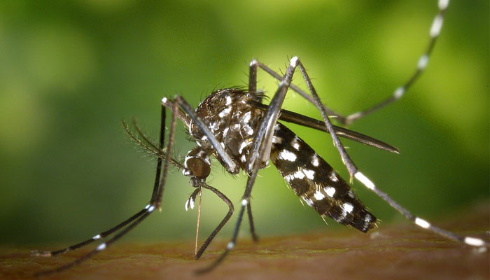 How to Prevent Dengue and Chikungunya Disease