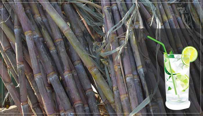 गन्ने के जूस पीने के फायदे | Benefit of Sugarcane Juice in Hindi