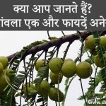 Amla Health Benefits in Hindi
