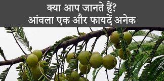 Amla Health Benefits in Hindi