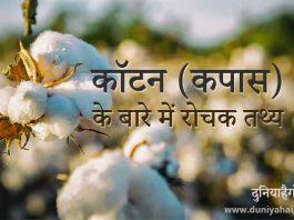Cotton in Hindi