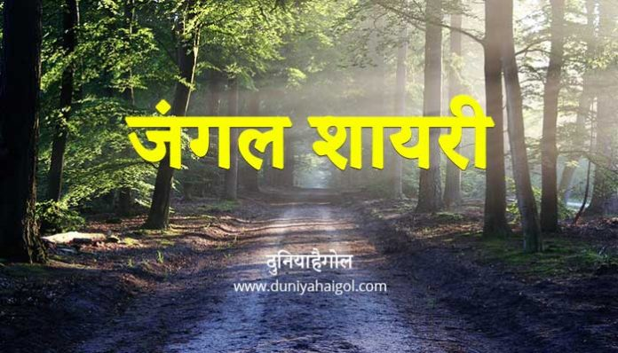 Forest Shayari
