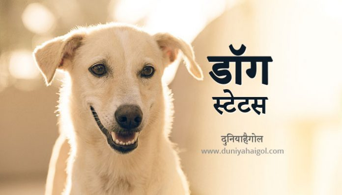Dog Status in Hindi