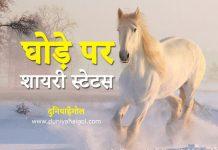 Horse Shayari