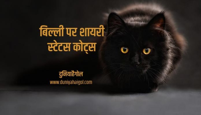Cat Shayari Status Quotes Hindi